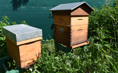 Des ruches à l'école